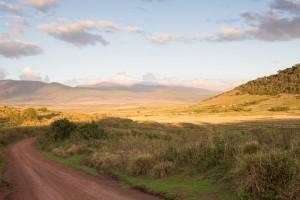 boekingen safaris