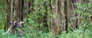 tree Empakai Ngorongoro