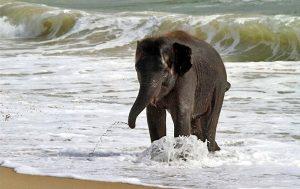 Elephant Saadani Park Tanzania