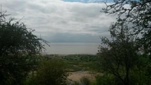 Buffalo at Lake Manyara Tanzania
