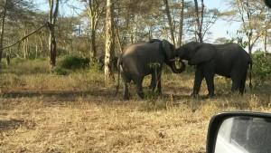Elephants at Lake Manyara Tanzania