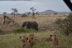 olifant 1