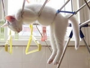 kat in wasrek