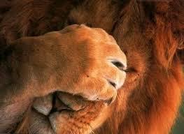 leeuw schaamte