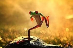 dansende kikker