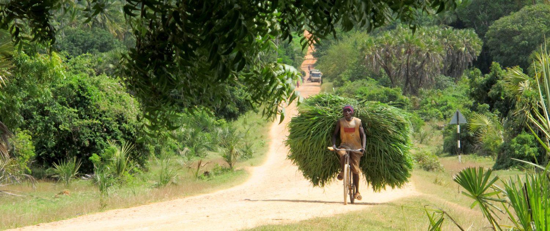 The road to Bushiri Tanzania