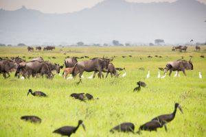 Serengeti na de regentijd