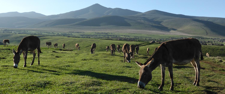 Ngorongoro donkeys