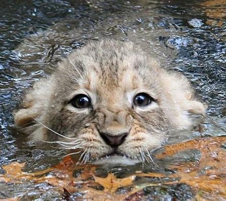 welpje in water