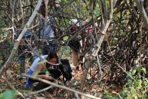 Hurkend door het struikgewas in Gombe Nationaal Park