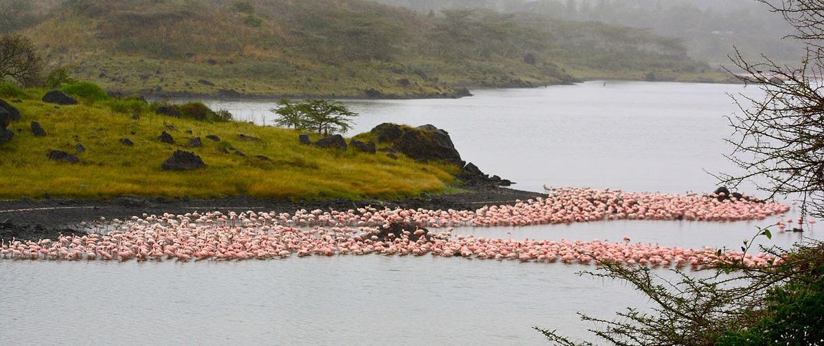 Flamingos at Arusha National Park