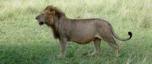 Natuur retraite Serengeti