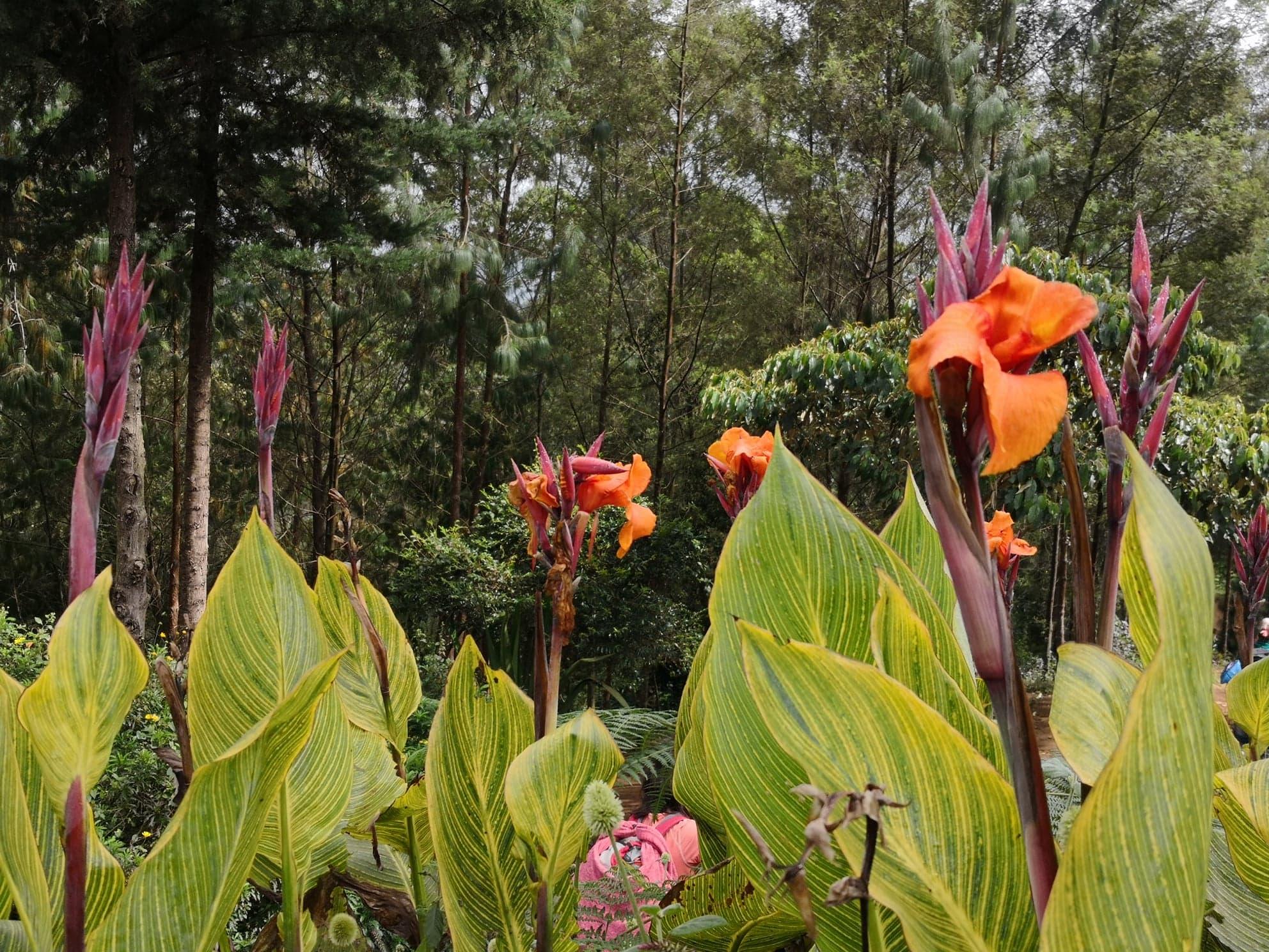 Tanzania flora