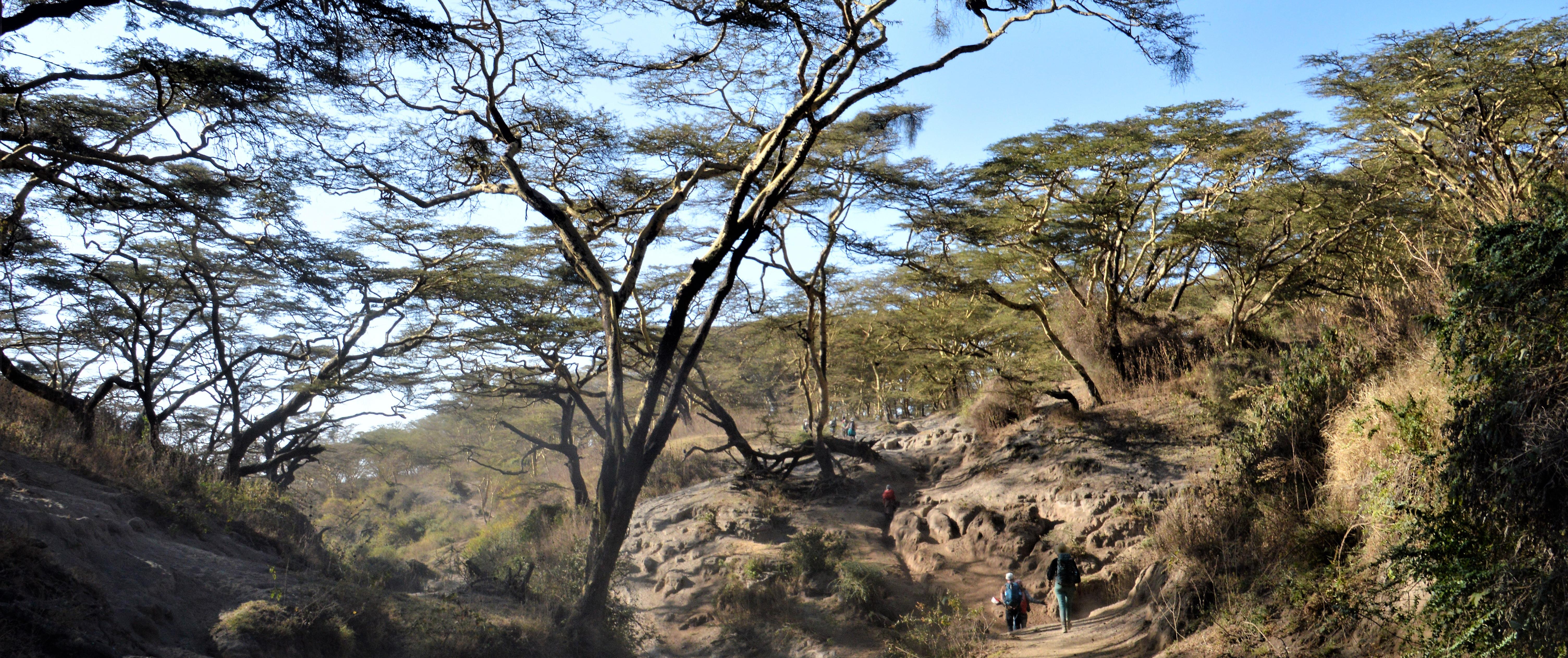 Hike Ngorongoro Mindful Adventure